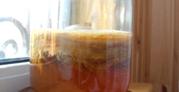 Чайний гриб - користь і шкода популярного напою