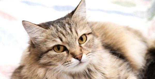 Чим годувати кота: здоров`я вихованця в ваших руках