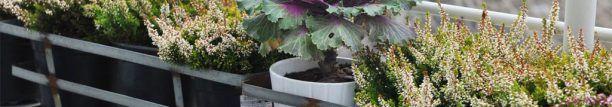 Декор балкона - робимо райський сад