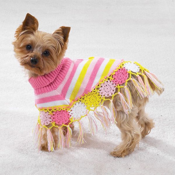 Недорогий одяг для собак: чи не страждає якість?