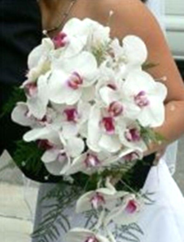 Орхідеї на службі косметології