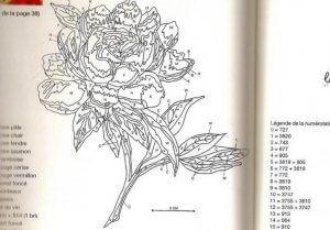 Схеми і малюнки для вишивки гладдю